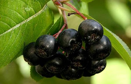 Плоды клюквы: свойства, витамины и пищевая ценность клюквы