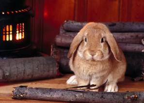 Год кролика по восточному календарю